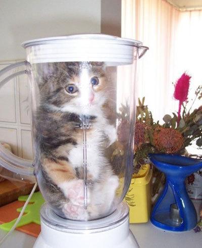 Cat-lunch